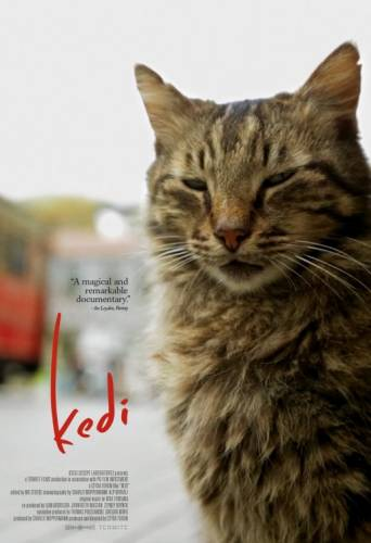 Kedi / Котки (2016)