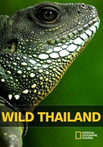Дивият Тайланд